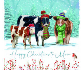 Cows at Christmas Time